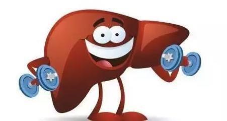 爱护肝脏先要管好自己的嘴 并牢记两大法宝