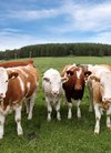 牛群47831_动物合集_动物类_图库壁纸_68De...