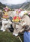 瑞士小镇举办传统赶牛下山活动 牛群被打扮得...