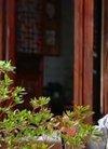 谢祖武对早恋的态度很赞,碰到16岁儿子和女生...