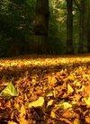 〓 秋兰飘香-秋天的黄色落叶壁纸:当前为类型:...