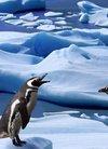 壁纸1600×1200企鹅写真 2 19壁纸,企鹅写真壁...