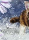小巧灵动猫咪壁纸_可爱的灵动猫咪