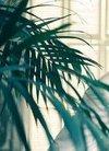 组图:王斑型色写真 彰显儒雅贵气