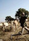 南方周末 - 【写真】牛群、牧人和AK-47--南苏...