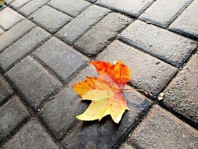 一片树叶献给一棵大树的网页