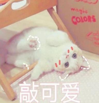 很火的可爱猫咪表情包大全 萌猫表情包带字图