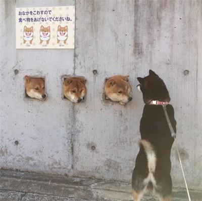 精选宠物犬搞笑图片大全_动物背景图_动物图