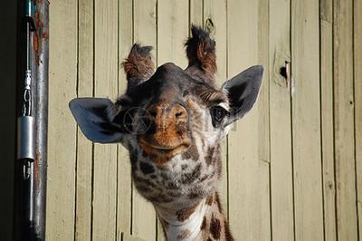 搞笑动物图片_搞笑动物素材_搞笑动物高清图