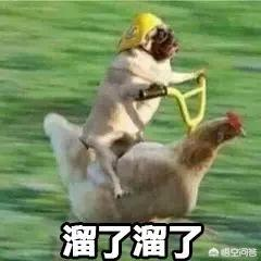 有哪些搞笑的动物图片?