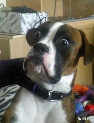 搞笑动物图片:当时我就震惊了