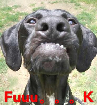 狗狗搞笑聊天表情包图片_动物QQ表情包下载