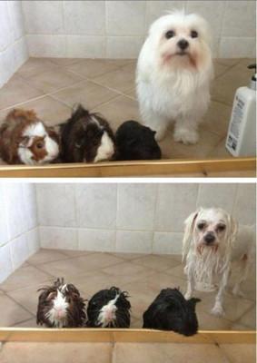 动物搞笑图片齐欢聚图1_动物_天极图片