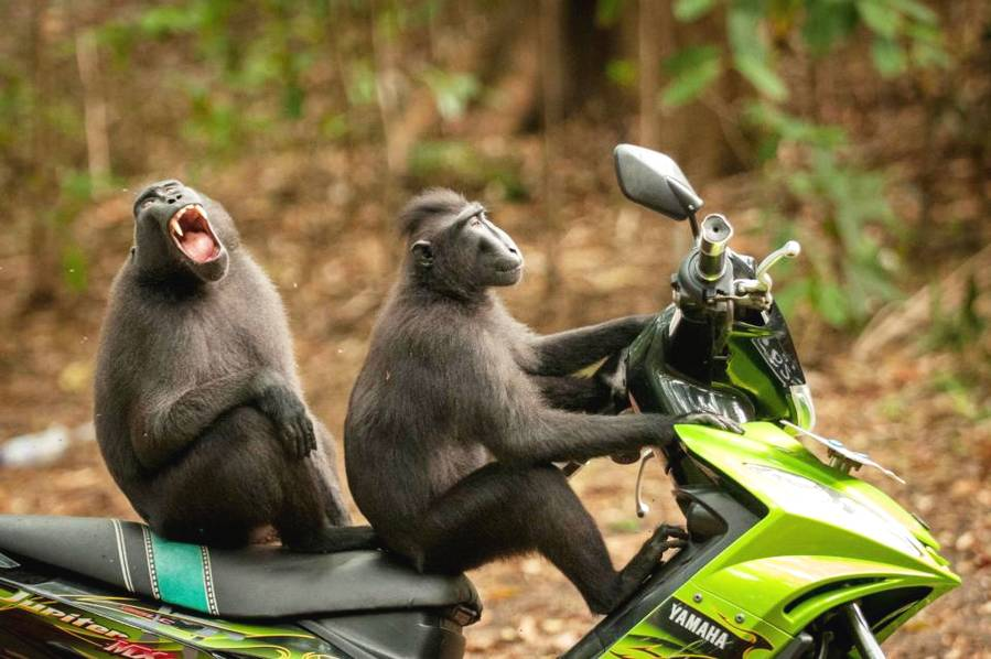 笑尿!野生动物搞笑摄影决赛