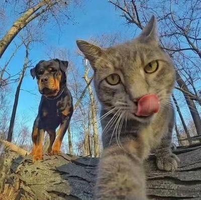 猫咪和狗狗的图片搞笑可爱_动物萌图
