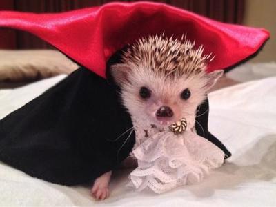 我喜欢的小动物|小动物摄影搞笑图片