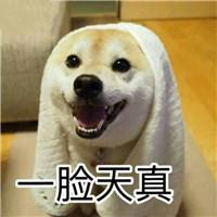 狗狗搞笑表情包头像带字 二狗子的天下