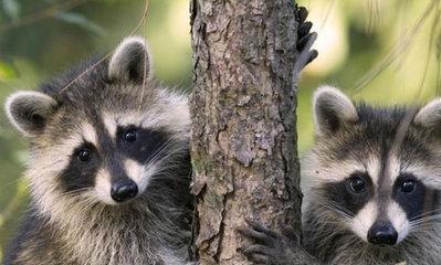 可爱搞笑动物们的周末季_图片频道_新华网