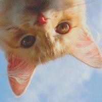 搞笑搞怪头像动物_微信头像图片大全