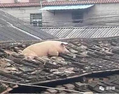 罕见的动物搞笑照片,别笑傻了!