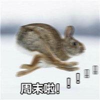 搞笑图片:动物奔跑周末啦表情包