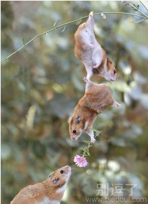 可爱动物图片笑话_搞笑可爱动物图片精选_爆