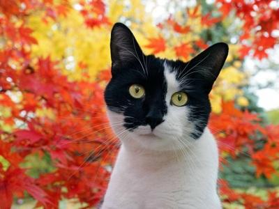 【动物桌面壁纸】高清动物图片-彼岸桌面壁纸