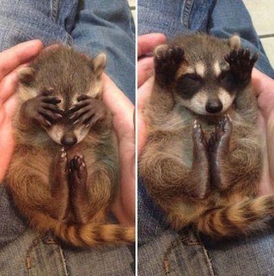 【动物搞笑图片大全可爱】动物萌搞笑图片